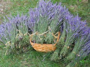 Lavender bunches from Mountain Farm
