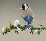 beautiful bird cropped